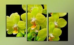 Модульная картина, Триптих - Салатовые Орхидеи