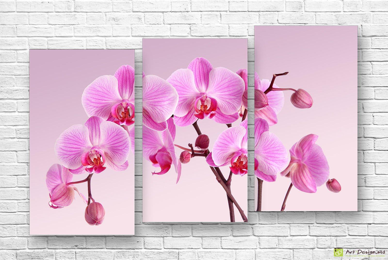 постеры на стену орхидеи бытовка колесах может